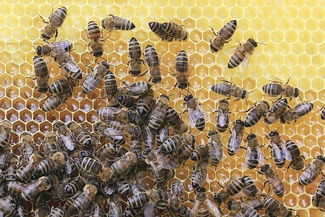Linajes Genéticos de la abeja melífera  (tipos de ADN)