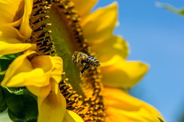 Flores amigas de las abejas