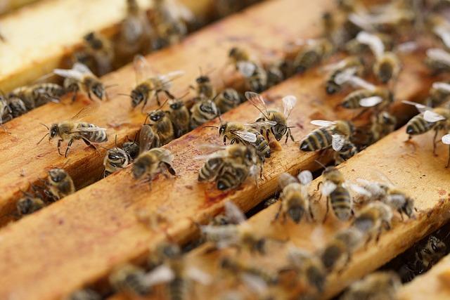 La colmena moderna y el paso de abejas